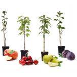 4 Winterharde Pilaar-Fruitbomen